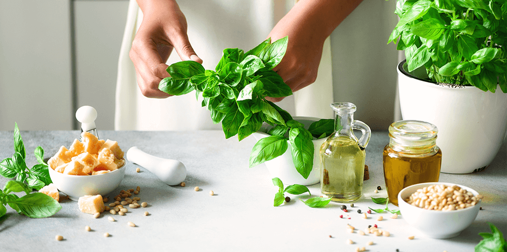 living color garden center how to grow basil plus recipes picking basil for cooking