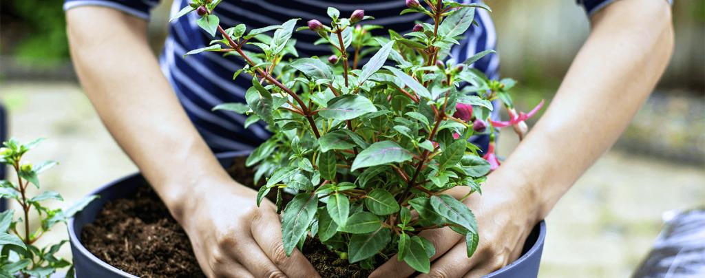 living color garden center self watering pots planting in outdoor pot