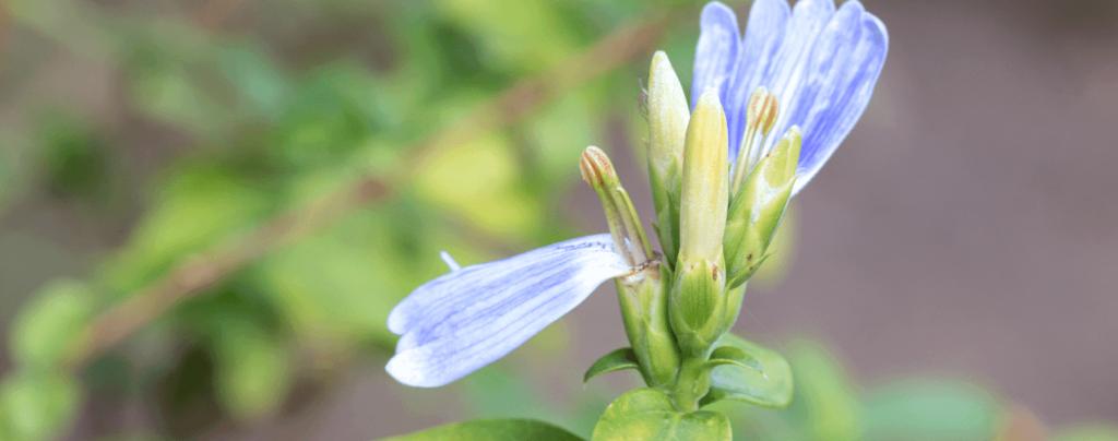 living color garden center shrubs fort lauderdale landscapes blue lips