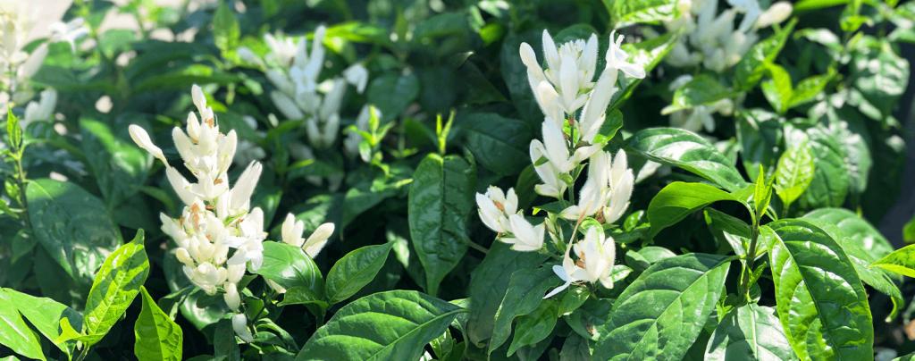 living color garden center shrubs fort lauderdale landscapes white candles
