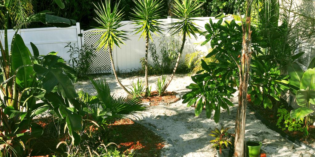 living color garden center goodbye lawn new landscape gravel tropical back yard