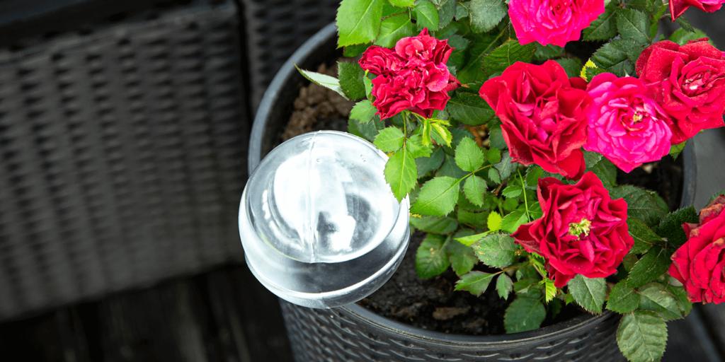living color garden center water houseplants red flowers water globe