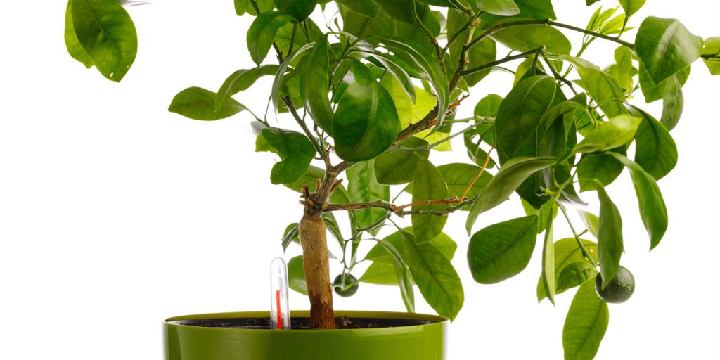 living color garden center water houseplants self watering pot meter