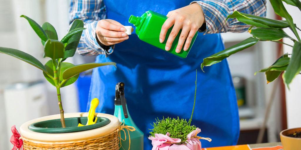 man fertilizing houseplants