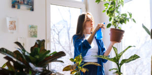 woman inspecting houseplants for bugs