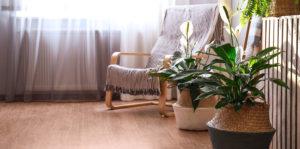 peace lilies living room
